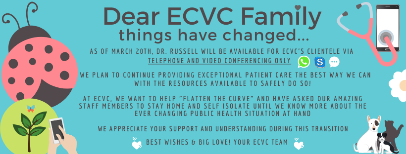 As of March 20th, dr. russell will be available for ecvc's clientele via telephone (1)
